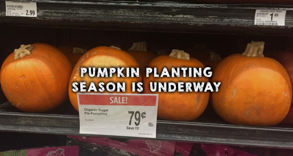 Pumpkin Planting Season is Underway